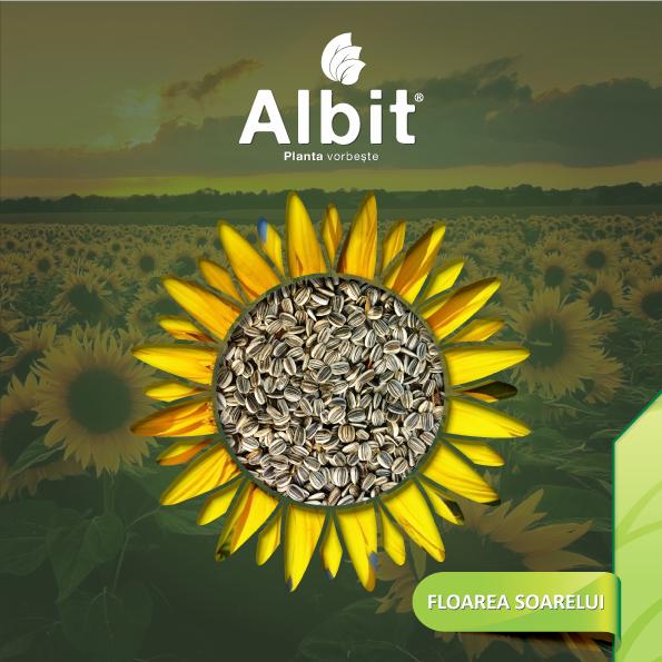 Brosura-floarea-soarelui